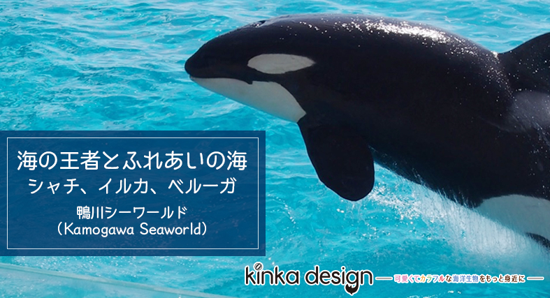 【鴨川シーワールド】海の王者とふれあいの海 〜シャチ・イルカ・ベルーガ〜