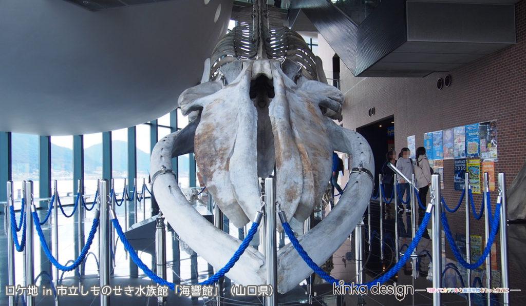 シロナガスクジラの骨格標本 市立しものせき水族館「海響館」(2020年2月6日訪問)