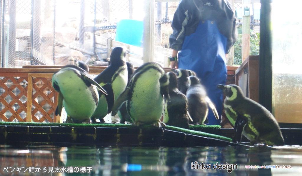 ペンギン館から見た様子