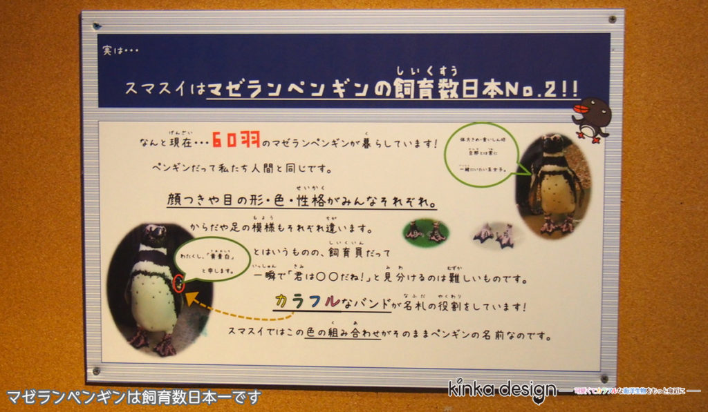 マゼランペンギンの飼育数は日本一